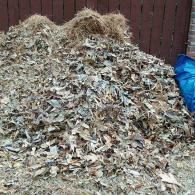 fall and spring yard clean ups including leaf removal