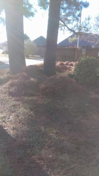 piles of pine needles